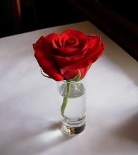 metro-table-rose